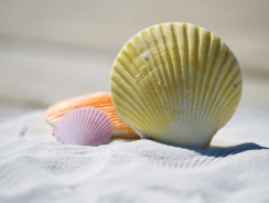 Comment changer le sable d'un filtre à sable pour piscine ?